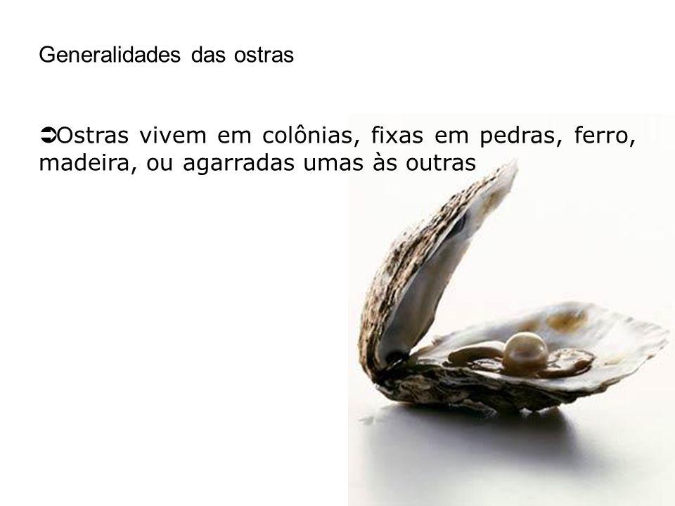 Generalidades das ostras