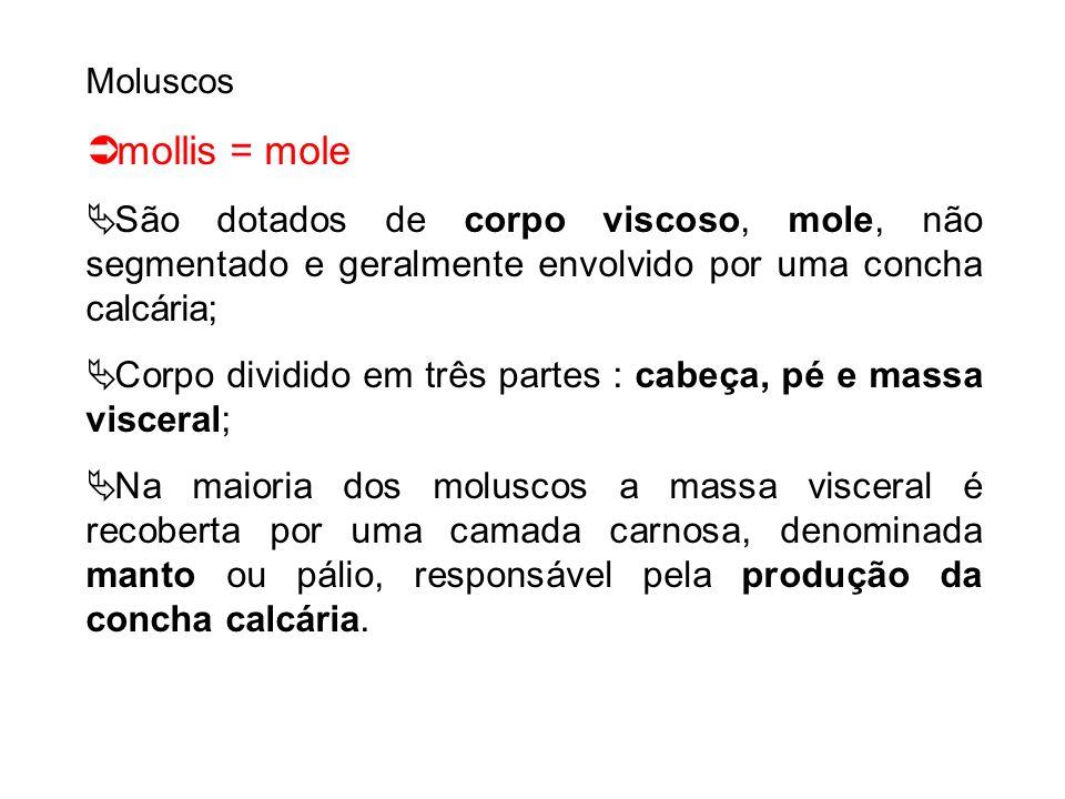 Moluscos mollis = mole. São dotados de corpo viscoso, mole, não segmentado e geralmente envolvido por uma concha calcária;