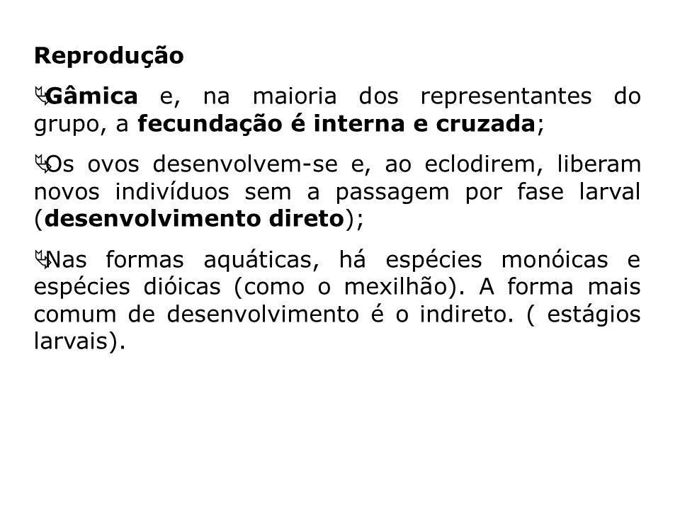 ReproduçãoGâmica e, na maioria dos representantes do grupo, a fecundação é interna e cruzada;