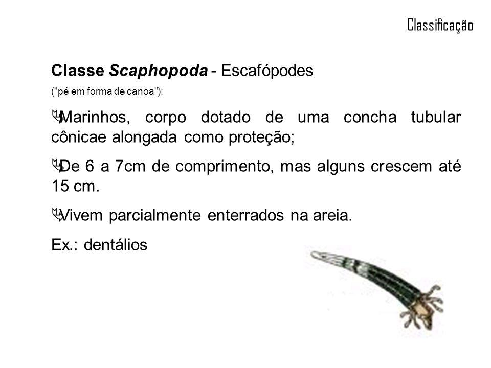 Classe Scaphopoda - Escafópodes