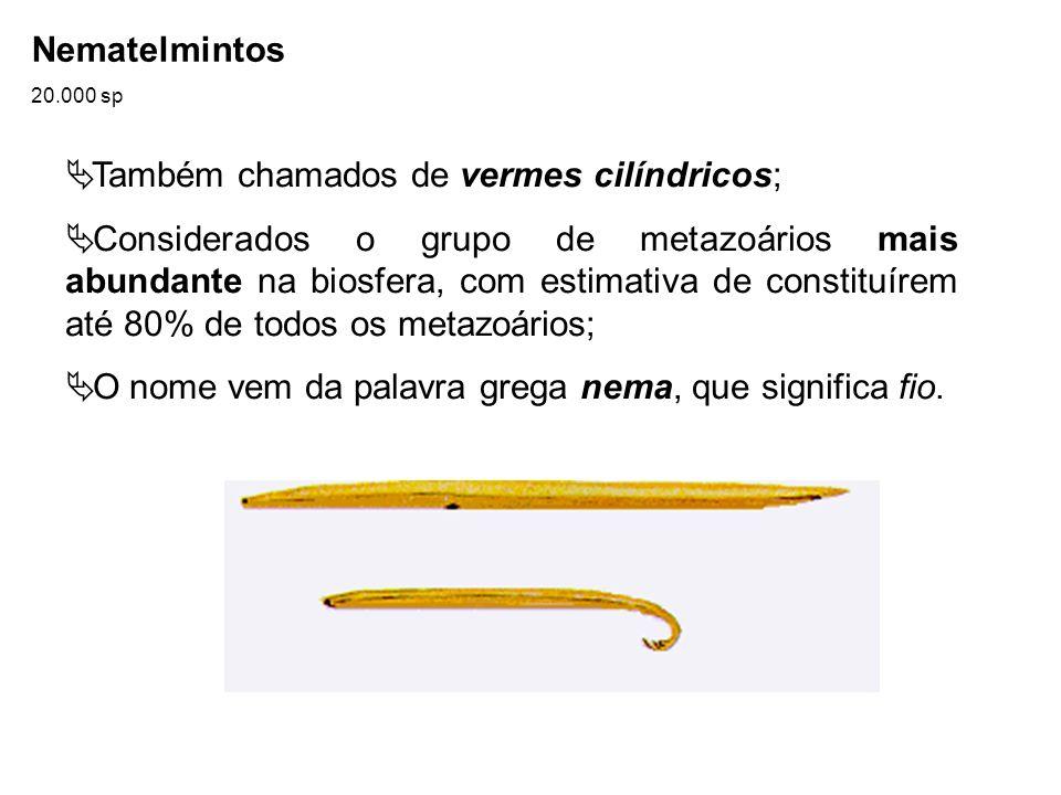 Também chamados de vermes cilíndricos;