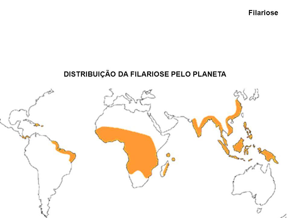 DISTRIBUIÇÃO DA FILARIOSE PELO PLANETA