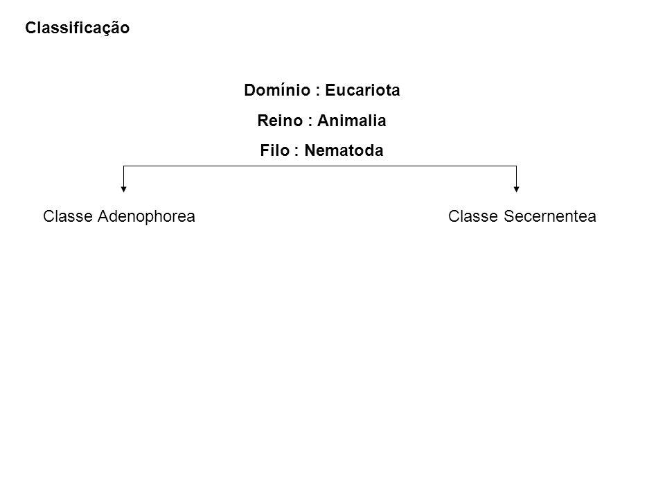 ClassificaçãoDomínio : Eucariota. Reino : Animalia. Filo : Nematoda. Classe Adenophorea. Classe Secernentea.