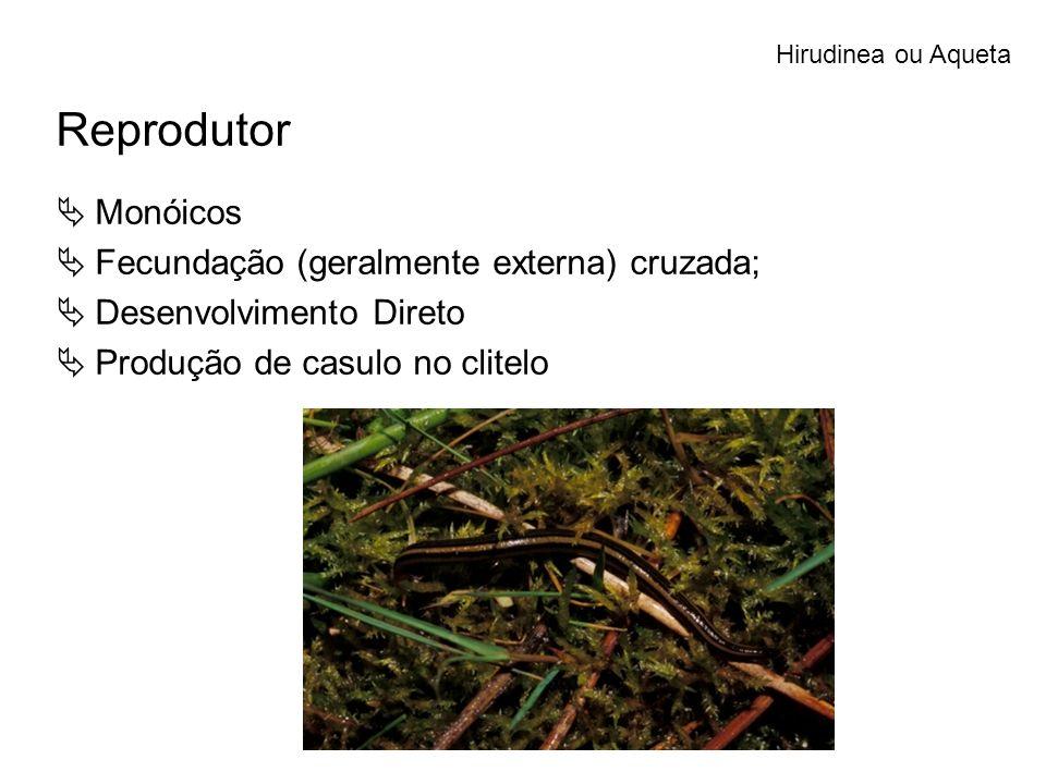 Reprodutor Monóicos Fecundação (geralmente externa) cruzada;