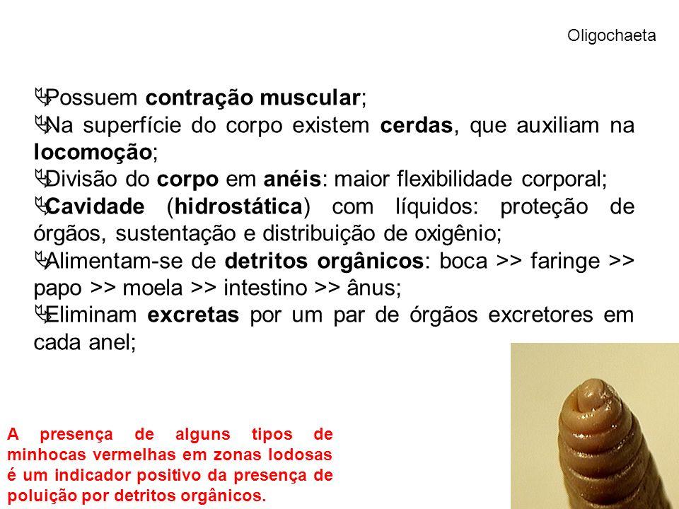 Possuem contração muscular;