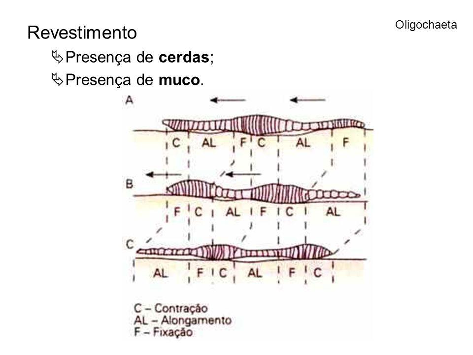 Oligochaeta Revestimento Presença de cerdas; Presença de muco.