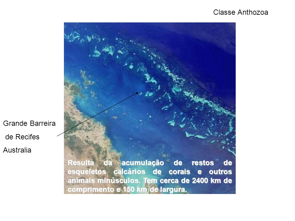 Classe Anthozoa Grande Barreira. de Recifes. Australia.