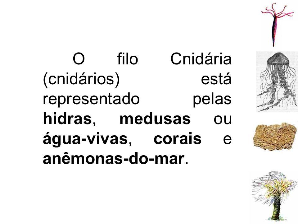 O filo Cnidária (cnidários) está representado pelas hidras, medusas ou água-vivas, corais e anêmonas-do-mar.