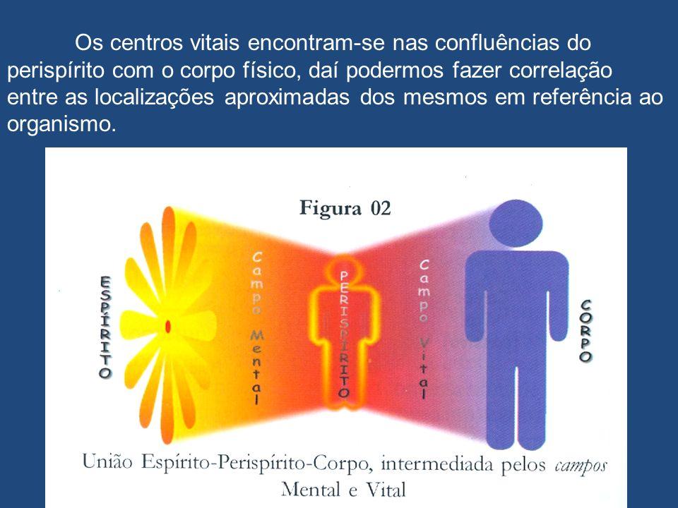 Os centros vitais encontram-se nas confluências do perispírito com o corpo físico, daí podermos fazer correlação entre as localizações aproximadas dos mesmos em referência ao organismo.