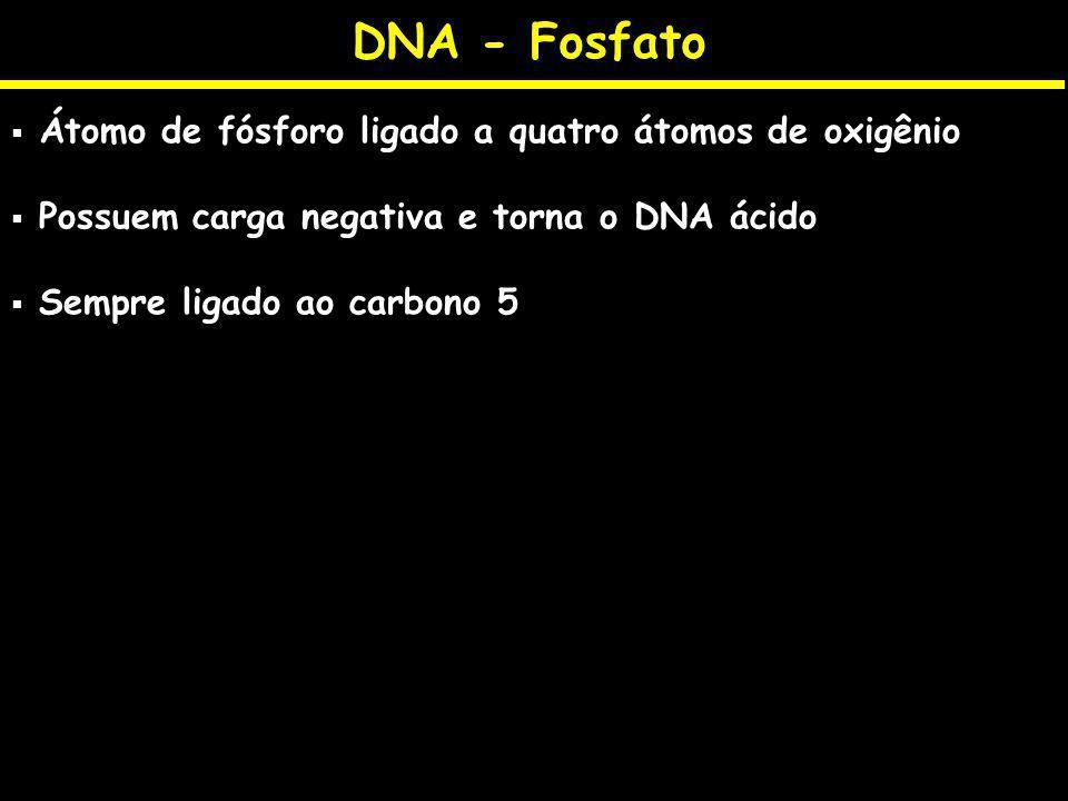 DNA - Fosfato Átomo de fósforo ligado a quatro átomos de oxigênio