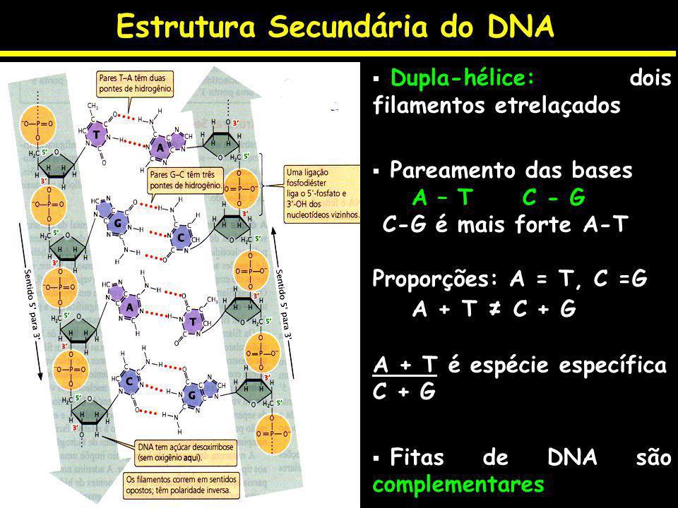 Estrutura Secundária do DNA