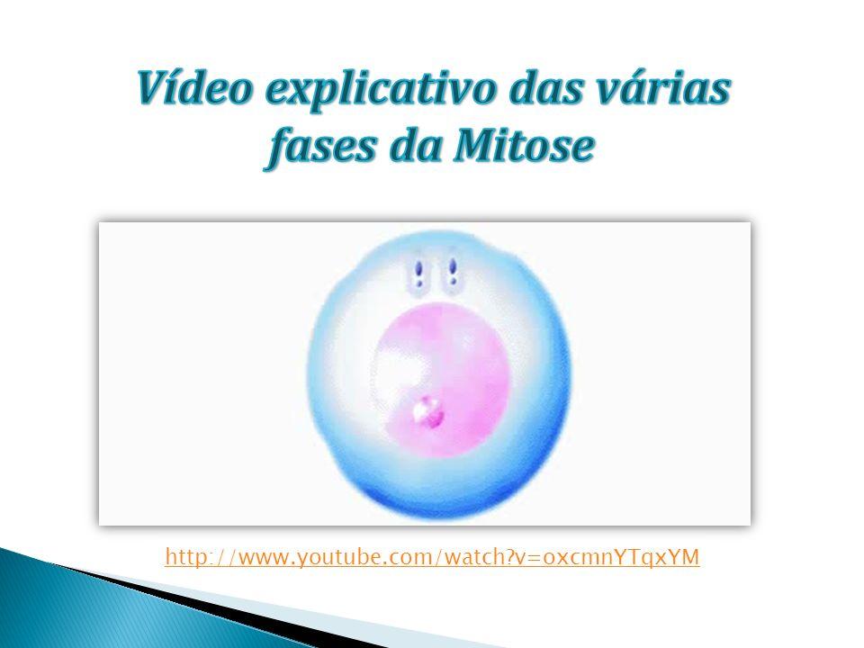 Vídeo explicativo das várias fases da Mitose