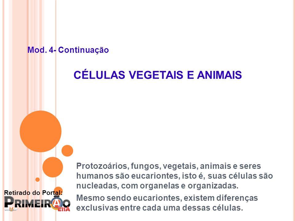 Mod. 4- Continuação CÉLULAS VEGETAIS E ANIMAIS