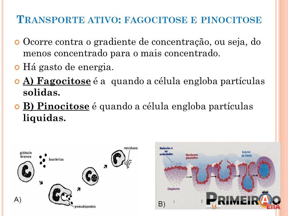 Transporte ativo: fagocitose e pinocitose