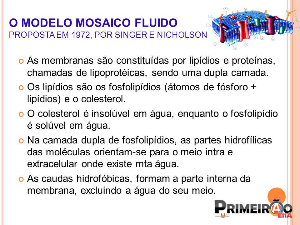O MODELO MOSAICO FLUIDO PROPOSTA EM 1972, POR SINGER E NICHOLSON