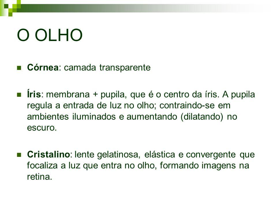 O OLHO Córnea: camada transparente