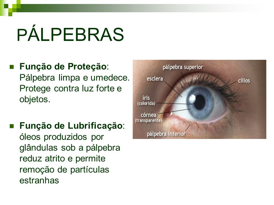 PÁLPEBRAS Função de Proteção: Pálpebra limpa e umedece. Protege contra luz forte e objetos.