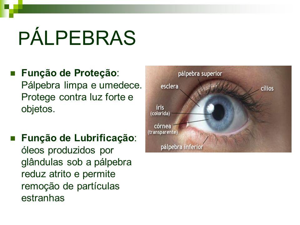 PÁLPEBRASFunção de Proteção: Pálpebra limpa e umedece. Protege contra luz forte e objetos.