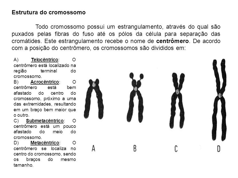 Estrutura do cromossomo
