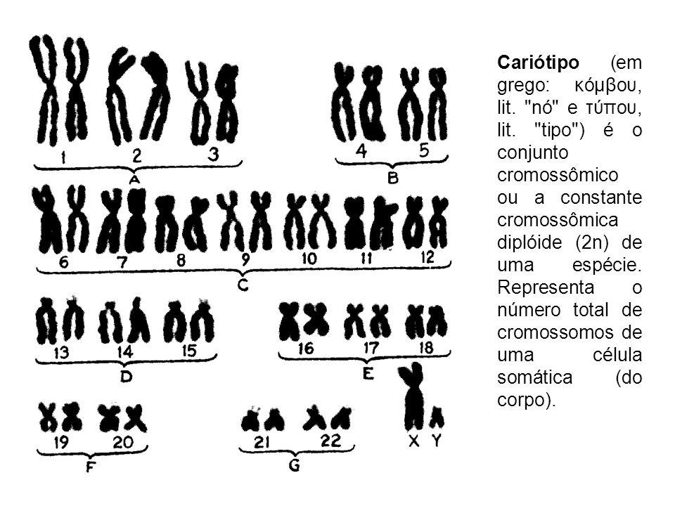 Cariótipo (em grego: κόμβου, lit. nó e τύπου, lit