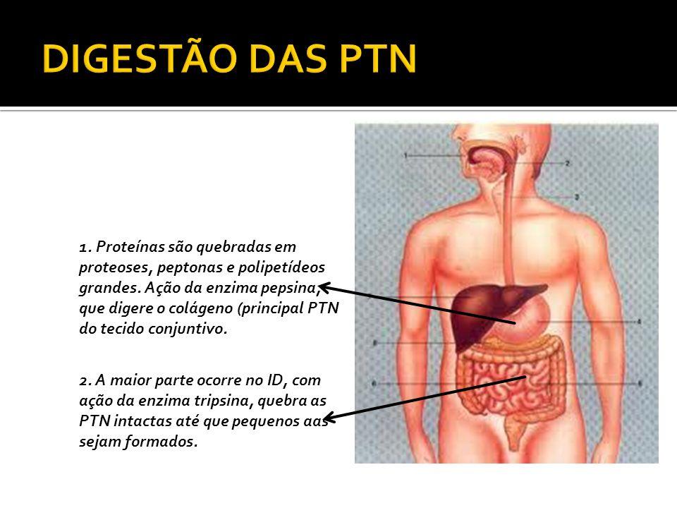 DIGESTÃO DAS PTN
