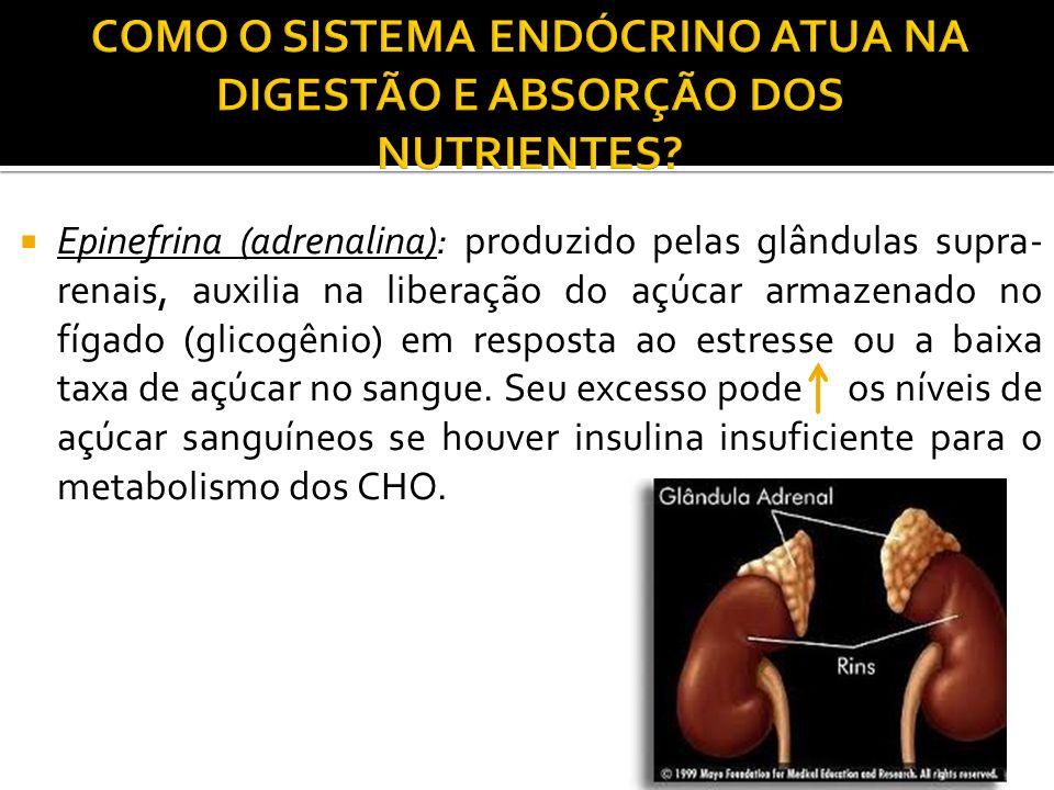 COMO O SISTEMA ENDÓCRINO ATUA NA DIGESTÃO E ABSORÇÃO DOS NUTRIENTES