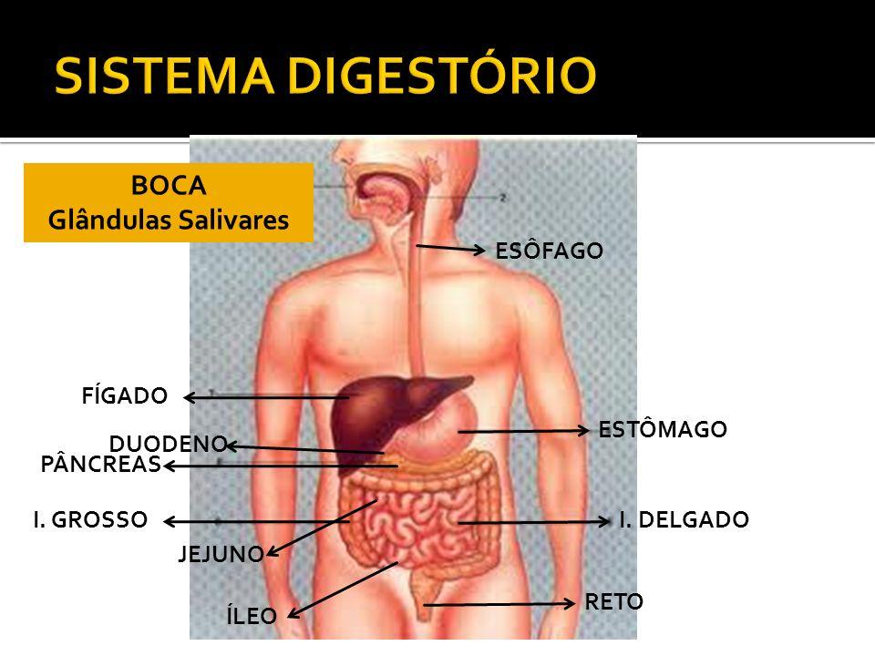 SISTEMA DIGESTÓRIO BOCA Glândulas Salivares ESÔFAGO FÍGADO ESTÔMAGO