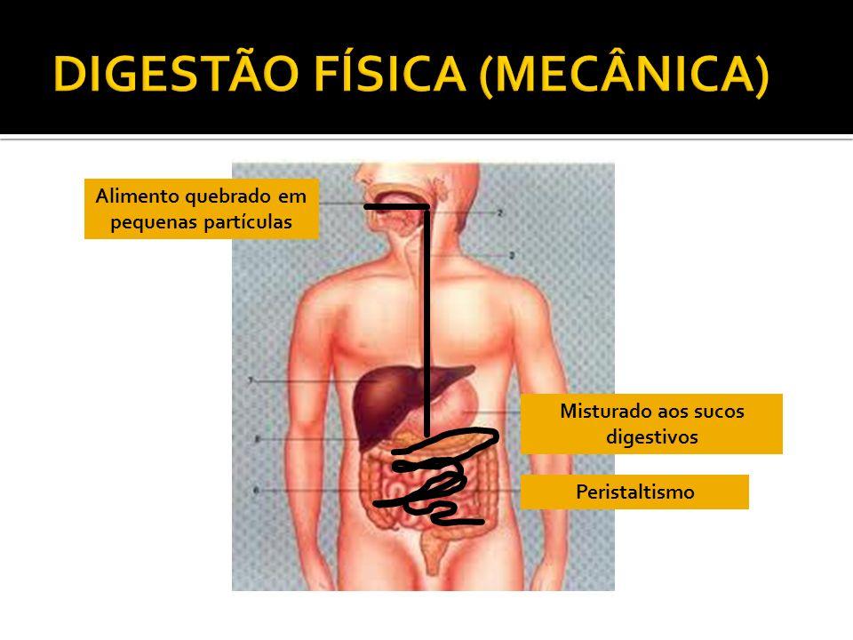 DIGESTÃO FÍSICA (MECÂNICA)