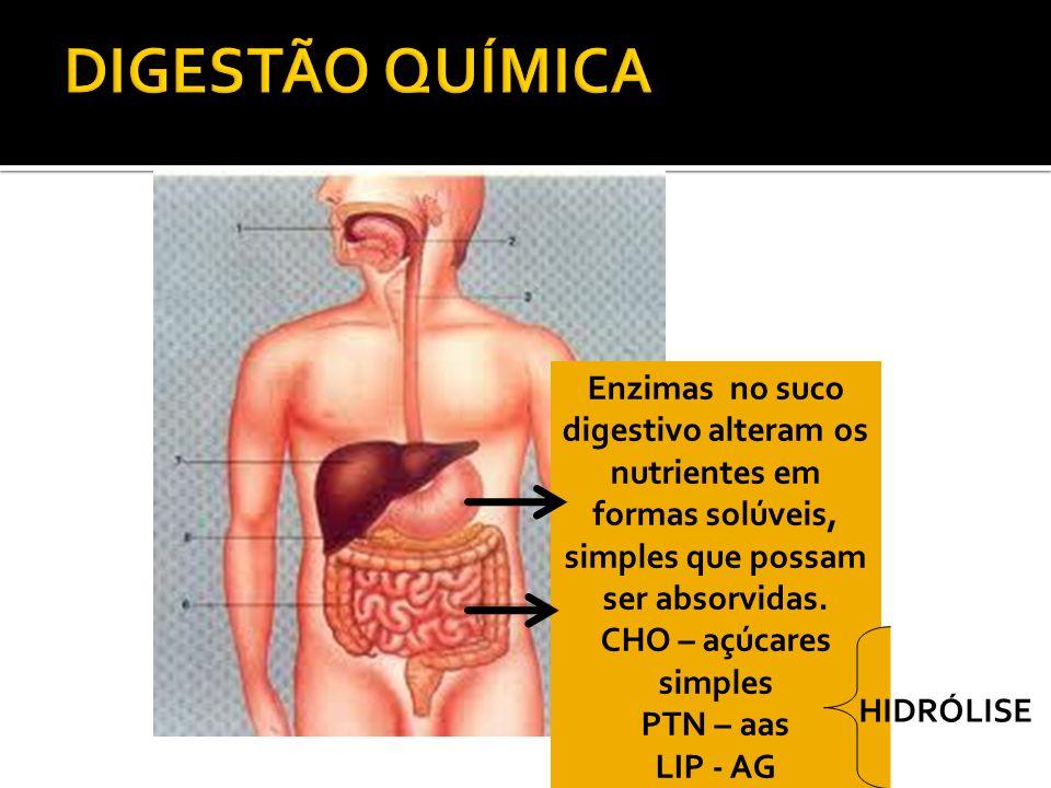 DIGESTÃO QUÍMICA Enzimas no suco digestivo alteram os nutrientes em formas solúveis, simples que possam ser absorvidas.