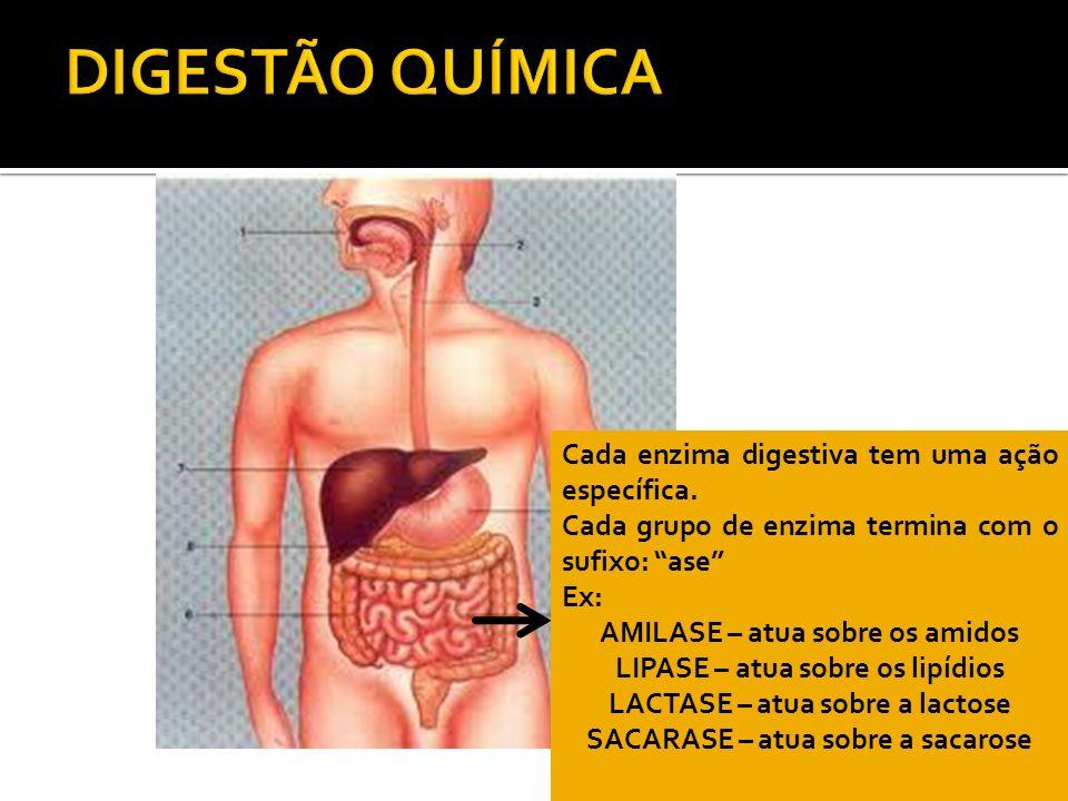DIGESTÃO QUÍMICA Cada enzima digestiva tem uma ação específica.
