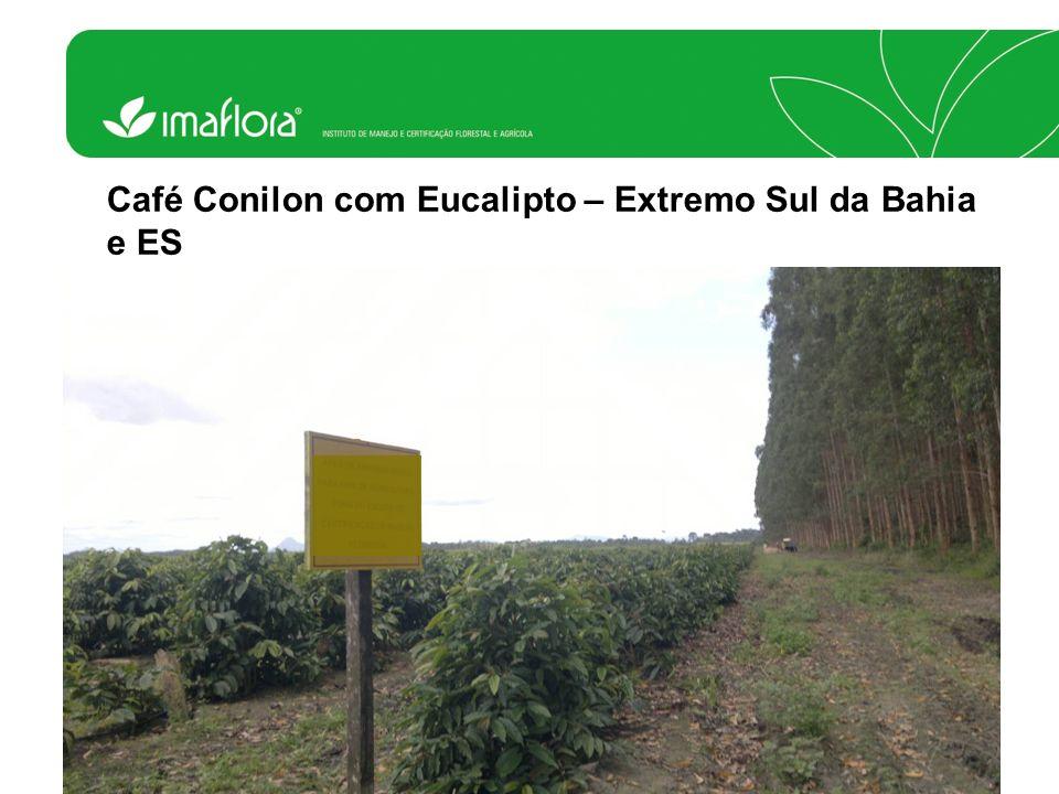 Café Conilon com Eucalipto – Extremo Sul da Bahia e ES