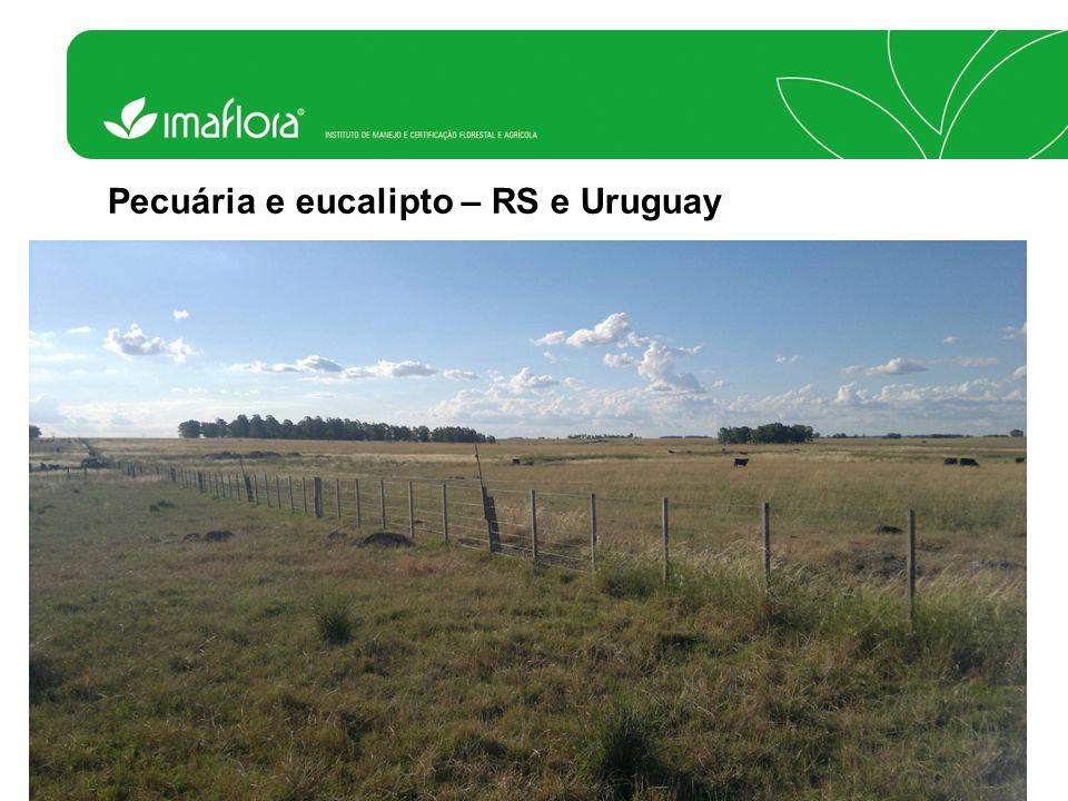 Pecuária e eucalipto – RS e Uruguay