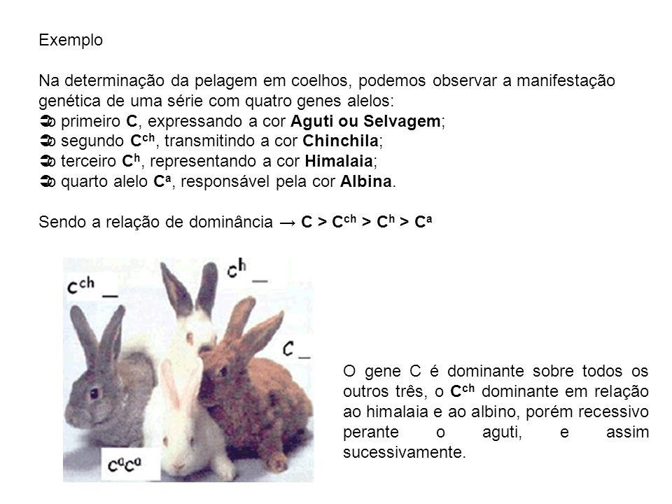 Exemplo Na determinação da pelagem em coelhos, podemos observar a manifestação genética de uma série com quatro genes alelos: