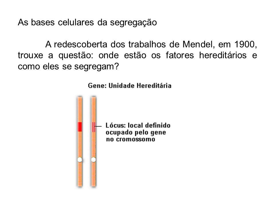 As bases celulares da segregação