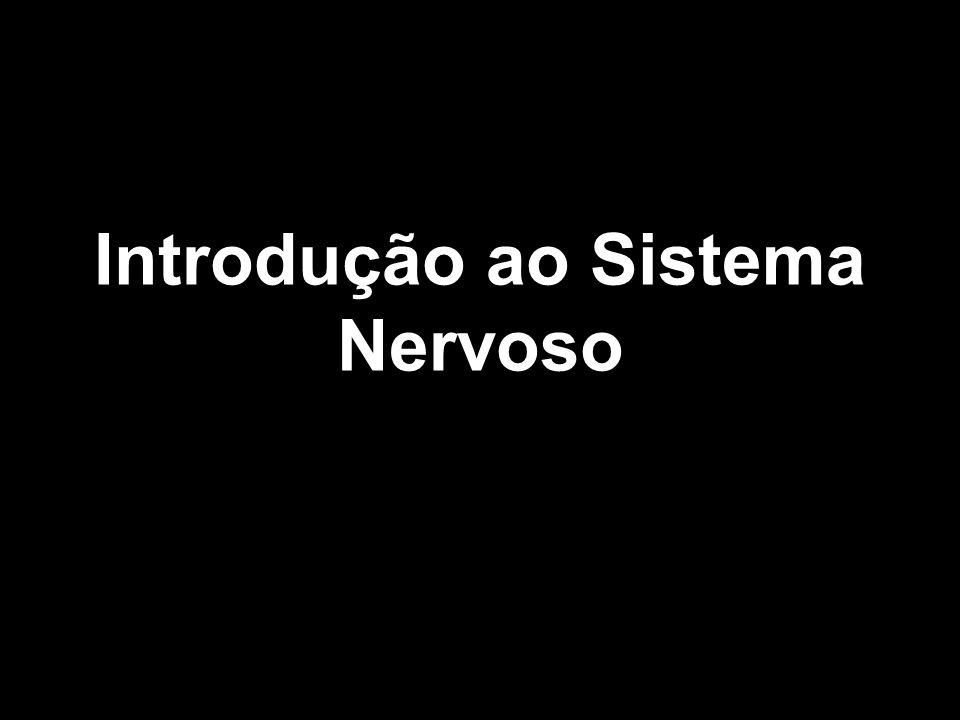 Introdução ao Sistema Nervoso
