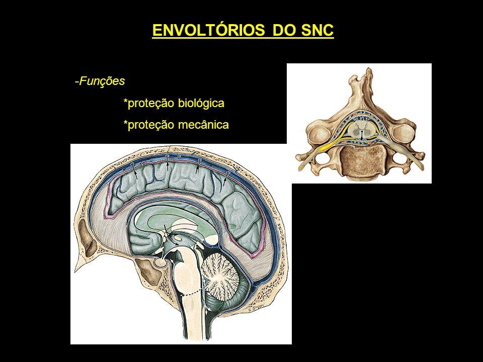 ENVOLTÓRIOS DO SNC Funções *proteção biológica *proteção mecânica