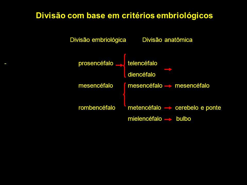 Divisão com base em critérios embriológicos