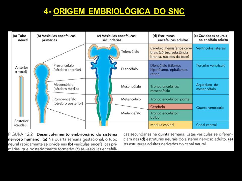 4- ORIGEM EMBRIOLÓGICA DO SNC