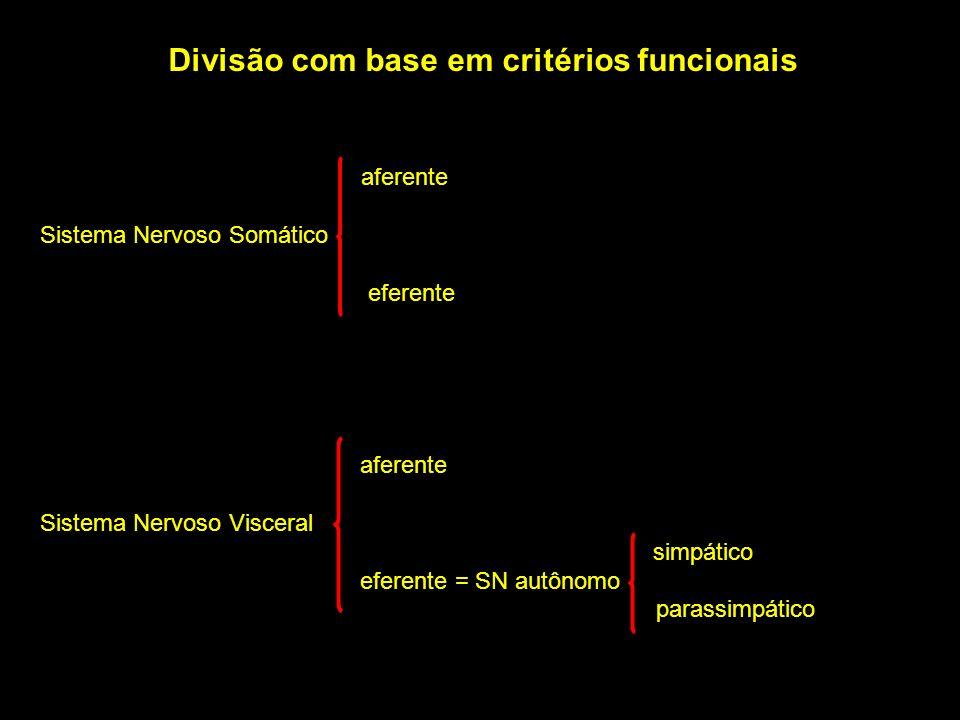 Divisão com base em critérios funcionais