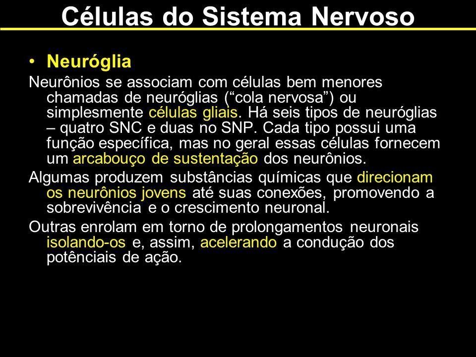 Células do Sistema Nervoso