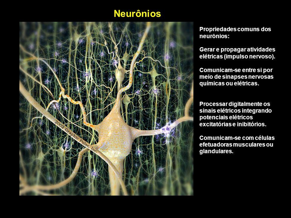 Neurônios Propriedades comuns dos neurônios: