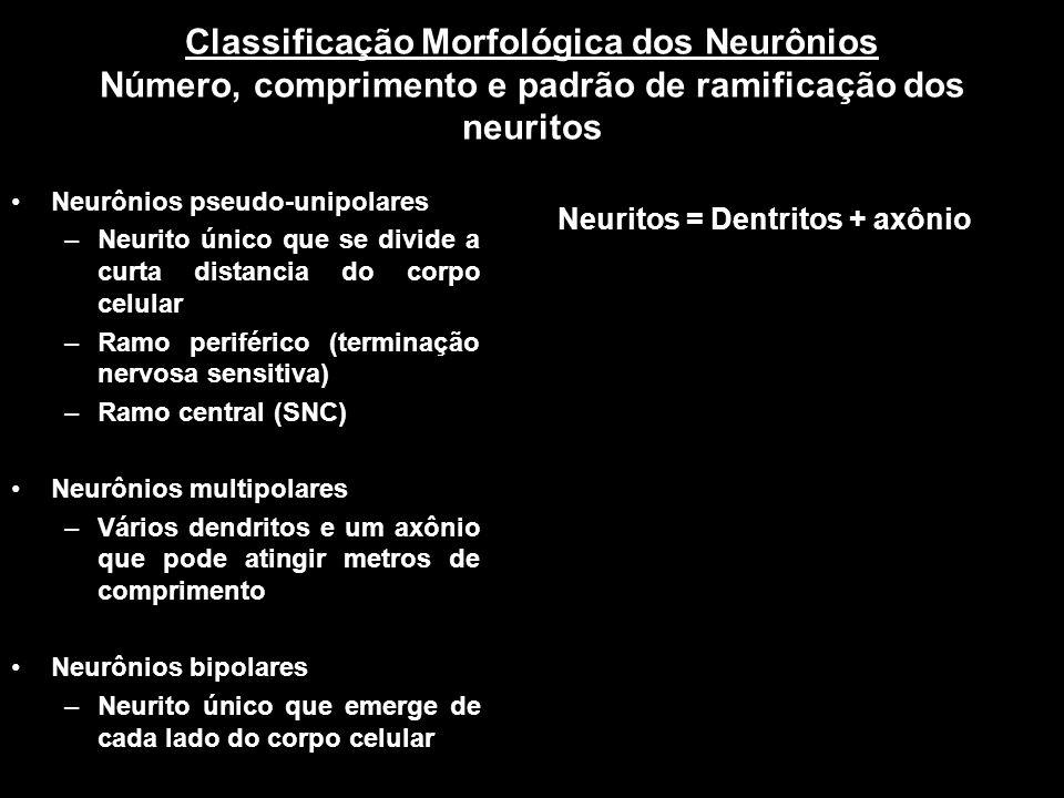 Classificação Morfológica dos Neurônios