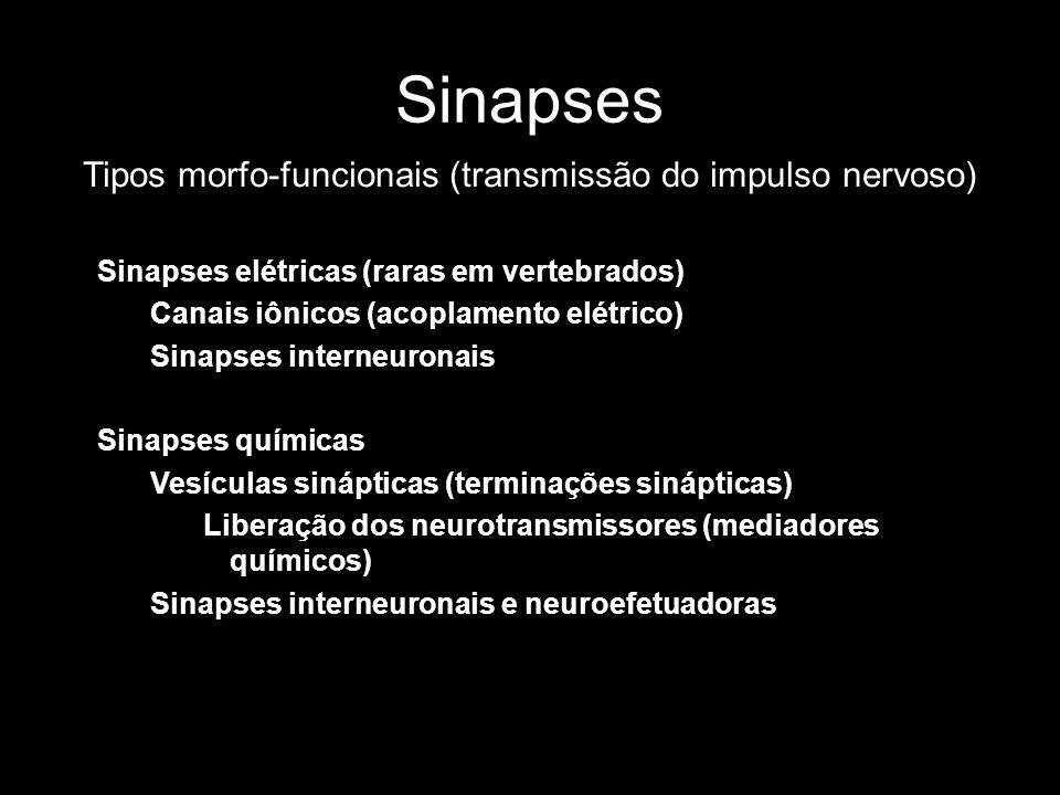 Tipos morfo-funcionais (transmissão do impulso nervoso)