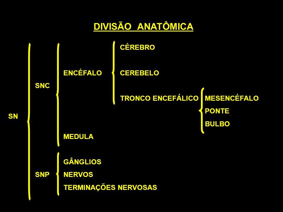 DIVISÃO ANATÔMICA CÉREBRO ENCÉFALO CEREBELO SNC
