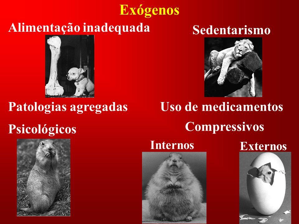 Exógenos Alimentação inadequada Sedentarismo Patologias agregadas