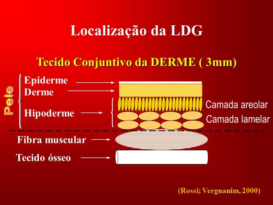 Tecido Conjuntivo da DERME ( 3mm)