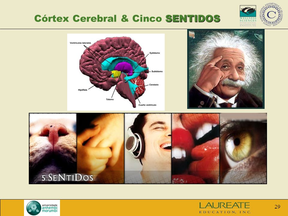 Córtex Cerebral & Cinco SENTIDOS