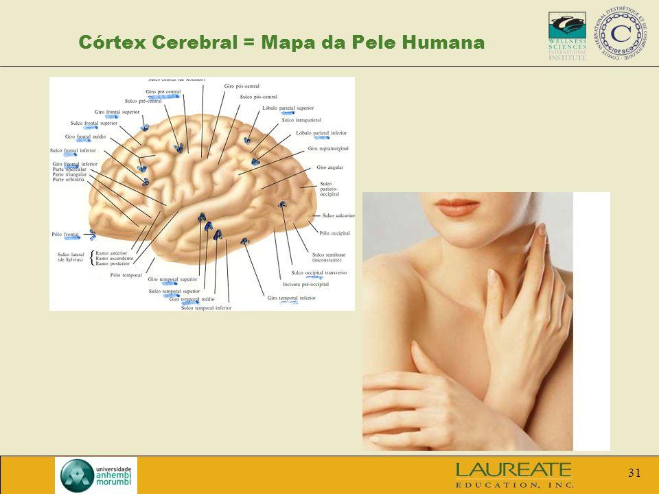 Córtex Cerebral = Mapa da Pele Humana
