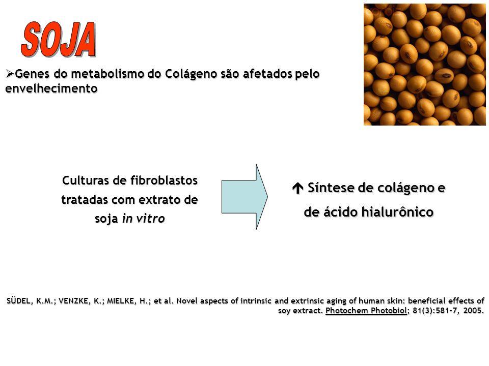SOJA  Síntese de colágeno e de ácido hialurônico