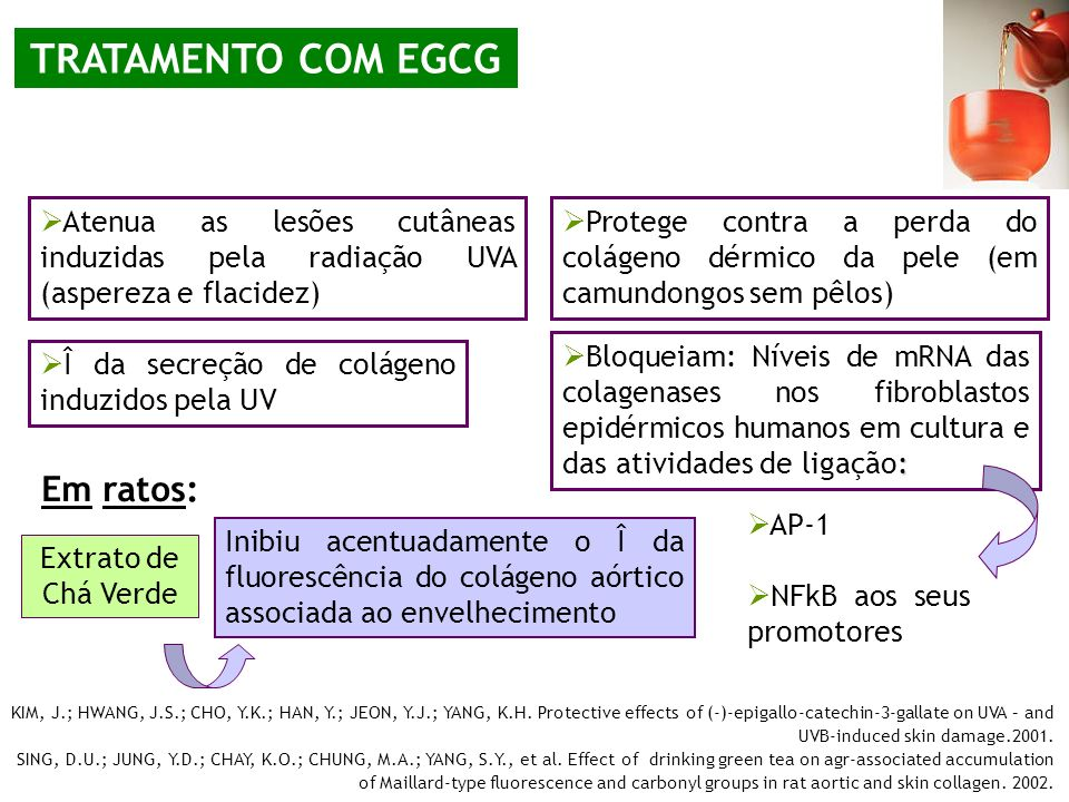 TRATAMENTO COM EGCG Em ratos: